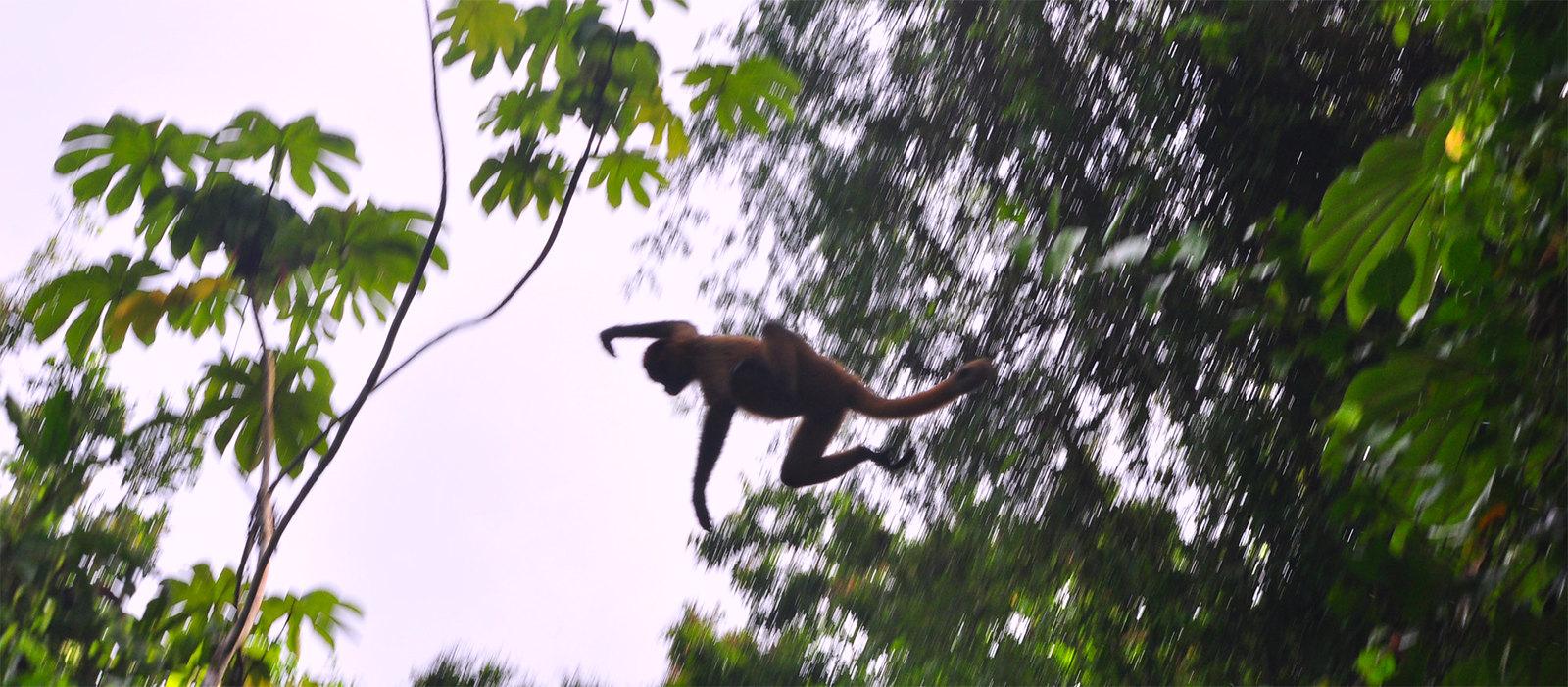 Viajar a Costa Rica / Ruta por Costa Rica en 3 semanas ruta por costa rica - 24377763118 c99f2cd781 h - Ruta por Costa Rica en 3 semanas