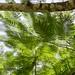 tree, Palenque por bruno vanbesien