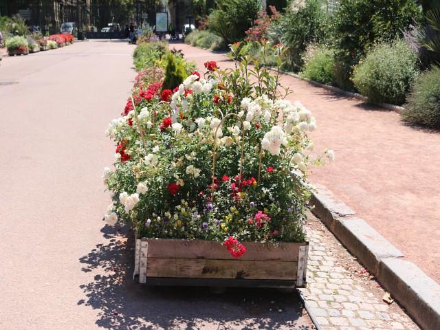 jardin des plantes obiective turistice lyon 4