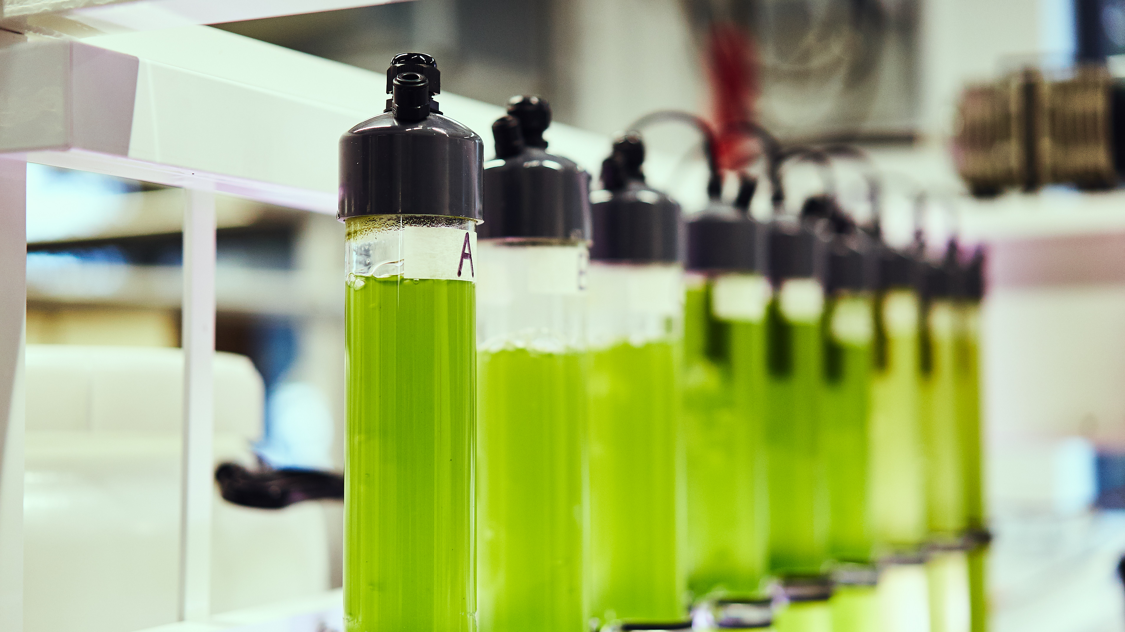 close up shot of algae in test tubes in chemical engineering laboratory