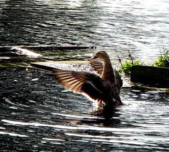 HolderSpread Your Wings