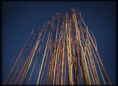 Prairie Grass Metalworks