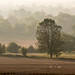 Wiltshire misty morning