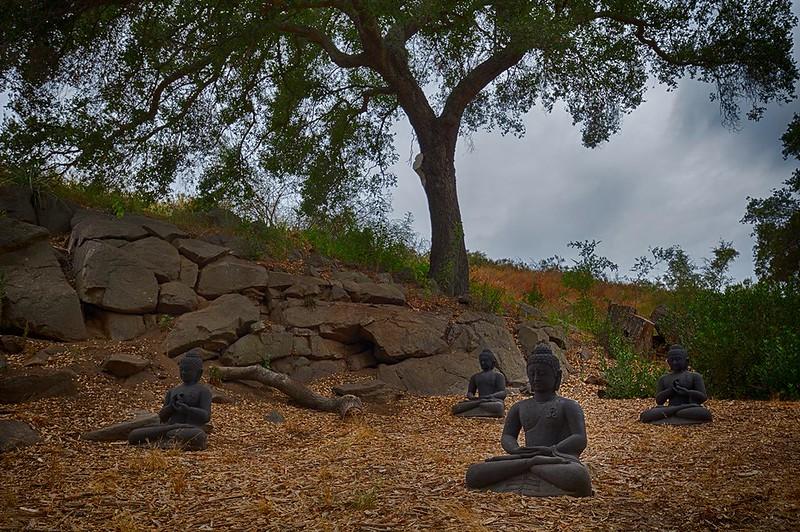 sitting like Buddhas