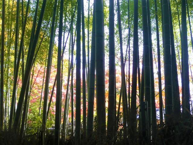 arashiyama0902034