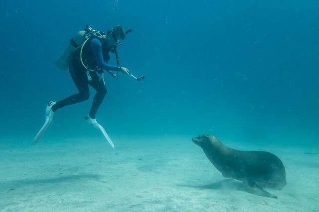 Shelley & sea lion