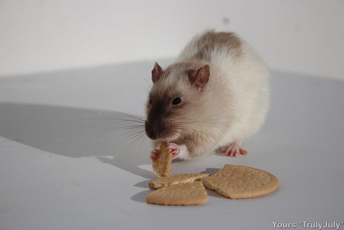 """""""I'll just munch it right here and now then."""""""