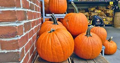 Pumpkins round and pumpkins fat, orange 🎃 too, did I mention that ?