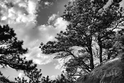 pine trees natural colorado landscape reservoirridgenaturalarea ftcollins scenery black white