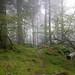 Skelghyll Wood, Ambleside  6