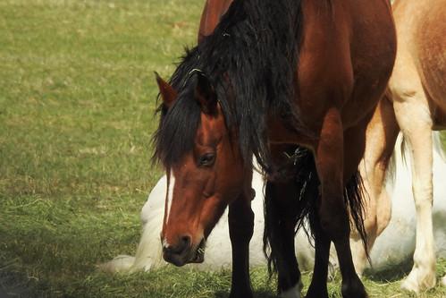 travel wyoming roadtrip usa fremontcounty tetonmountainrange teton animals animal horse horses mule mountainside landscape mules farm grass