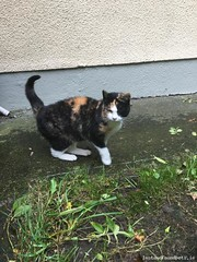 Sun, Oct 1st, 2017 Found Female Cat - Proudstown, Navan, Meath