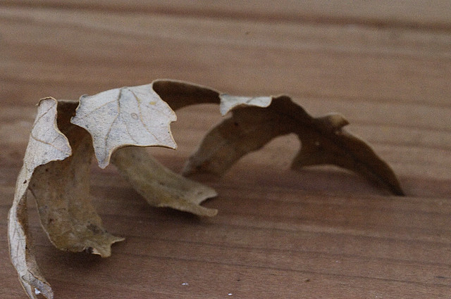 Oak Leaf on the Porch
