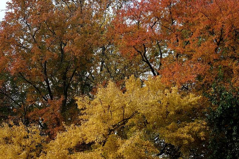Classic Fall colors