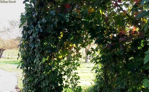 Du jardin à la Nature...