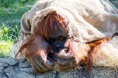 Columbus Zoo 10/17/17