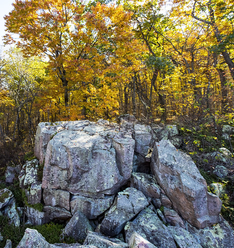 Baxter's Hollow State Natural Area