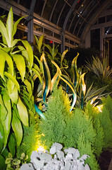Chihuly Nights 10.26.2017-096