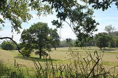 Dans la vallée de la Soulle à Montpinchon - Photo of Guéhébert