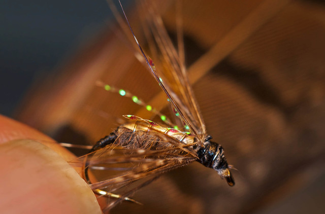 Wet Fly with ribbing