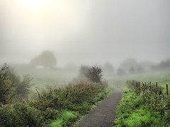 Misty Morning Walk