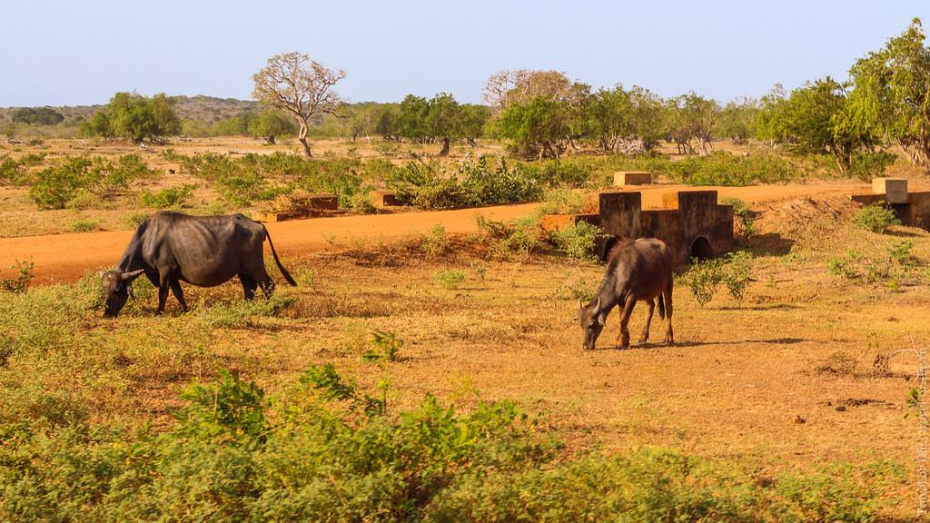 25.06-Yala-National-Park-Sri-Lanka-canon-1500px-030