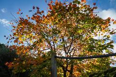 Botanic Gardens Edinburgh Oct 2017 -114