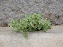 drainage kerb gardens