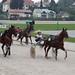 Kasaške dirke v Komendi 24.09.2017 Tretja dirka