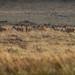 The Deer Reconnaissance by neil 36