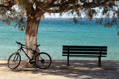 The Tree, The Bench and The Bike