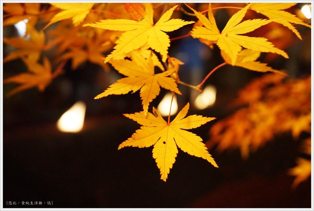 紅葉迴廊-紅葉祭-夜楓-7