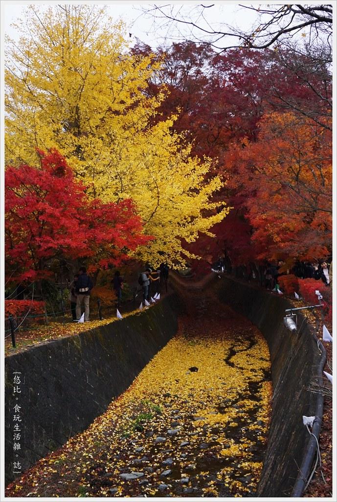 紅葉迴廊-紅葉祭-白天-32