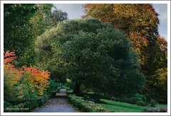 Coole Park Co. Galway