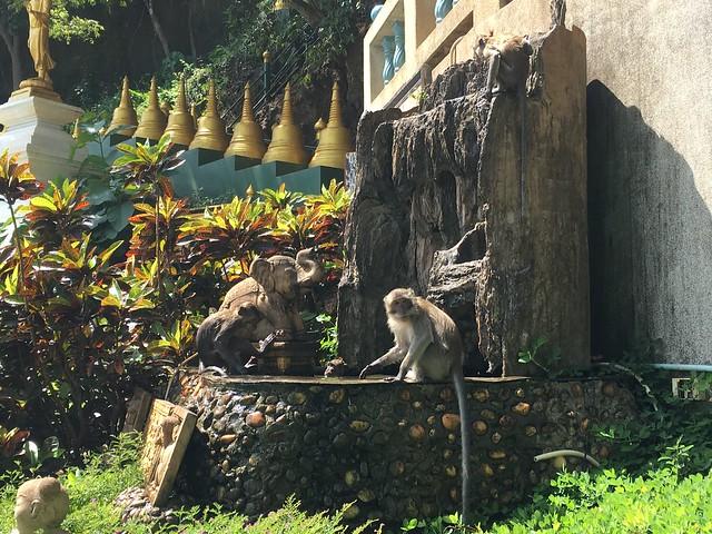 猿がたくさんいるのでかわいいけど注意