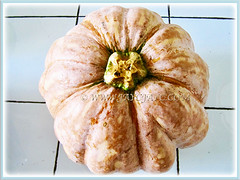 An orange fruit or pepo of Cucurbita moschata (Pumpkin, Butternut Pumpkin, Butternut/Winter Squash, Cheese Pumpkin), 4 Nov 2010