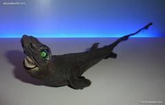 Rare deep sea shark taxidermy