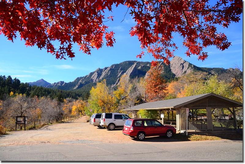 2017 Maple in Fall, Boulder, Colorado  (46)