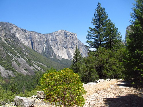 Views along the Old Carriage Road in Yosemite National Park, California