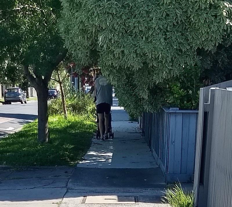 Bushes blocking footpath