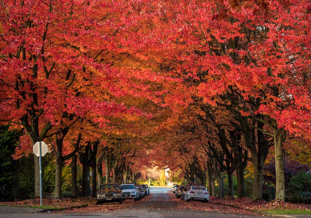 Vancouver Autumn 2017