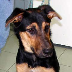 Cani in adozione: diciassette nuovi esemplari ospitati nel Canile Sanitario
