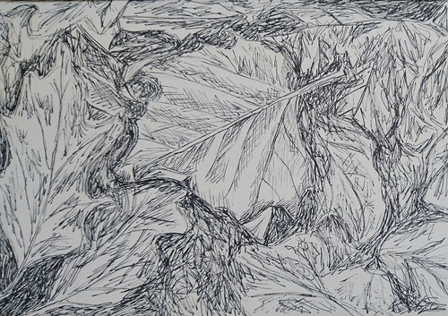 001 // 365 - leaves sketch_derwentgraphik_clg