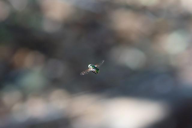 The Flying Dot