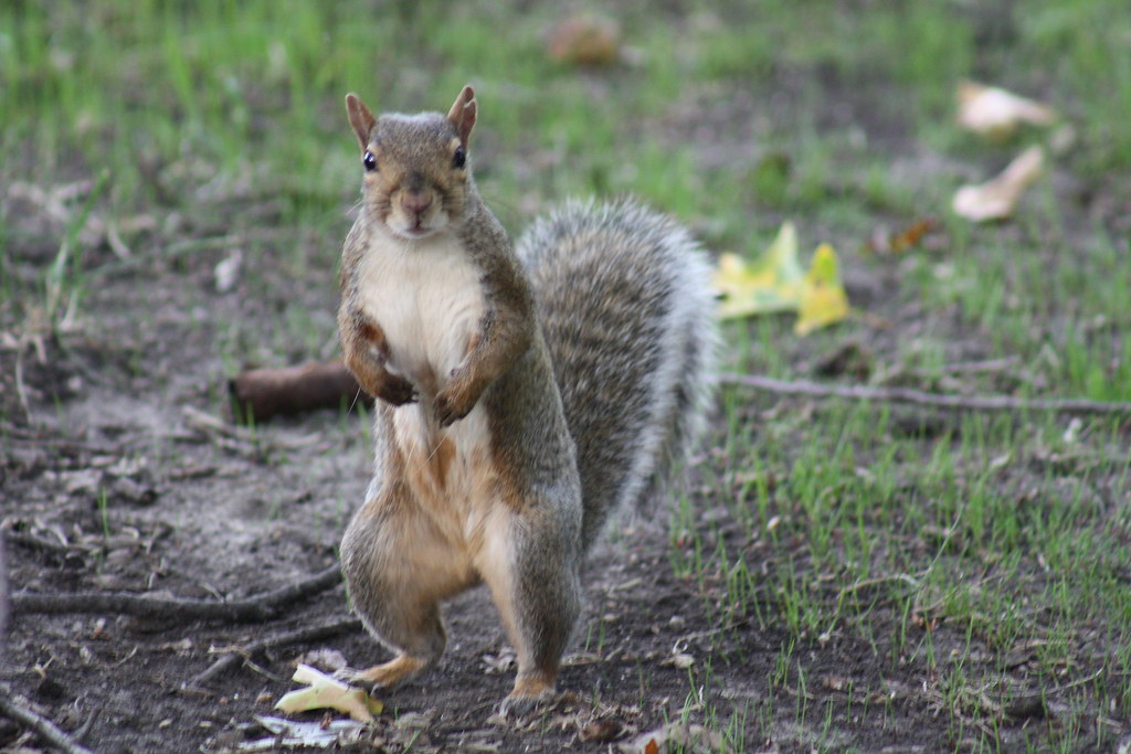 Squirrel Invasion 13