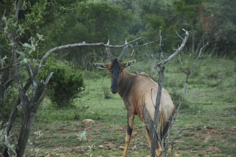 Maasai Mara 2 12