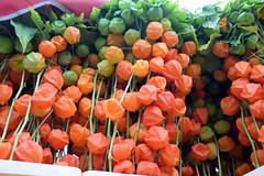 DSC_7544 London Columbia Road Sunday Flower Market Orange Chinese Lanterns