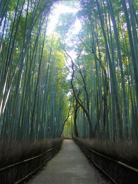 arashiyama0902031