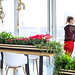 Belebendes Interieur mit erfrischenden Zimmerpflanzen