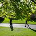 Botanic Gardens Edinburgh Oct 2017 -60